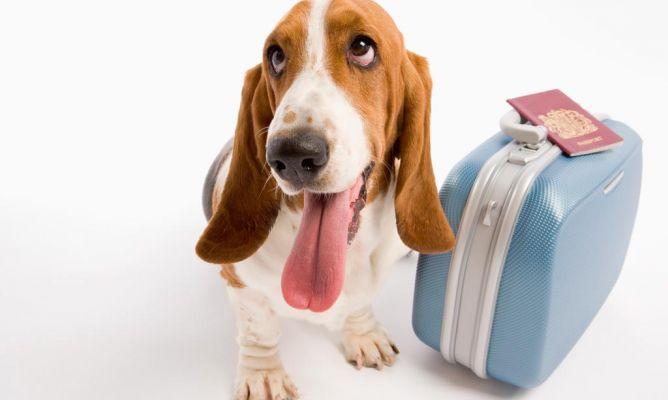 asegurate-de-que-tu-mascota-viaja-segura-1