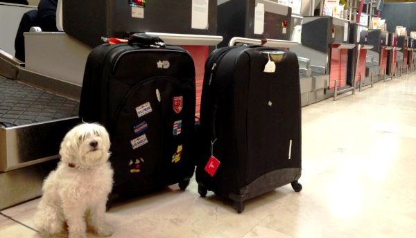 asegurate-de-que-tu-mascota-viaja-segura-3